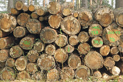 Woodpile with damage. A woodpile with tree trunks that were stored some time. The wood has already clearly visible damages royalty free stock images