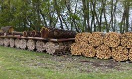 Woodpile de bois de chauffage Image libre de droits