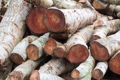 Woodpile de la madera de construcción cortada Fotos de archivo libres de regalías