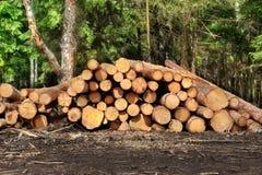 Woodpile del pino aserrado y registros Spruce para la industria de la silvicultura Fotos de archivo libres de regalías