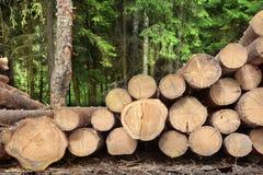 Woodpile del pino aserrado y registros Spruce para la industria de la silvicultura Foto de archivo