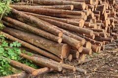 Woodpile del pino aserrado y registros Spruce para la industria de la silvicultura Imágenes de archivo libres de regalías