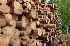 Woodpile del pino aserrado y registros Spruce para la industria de la silvicultura Imagen de archivo libre de regalías