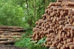 Woodpile del pino aserrado y registros Spruce para la industria de la silvicultura Fotografía de archivo