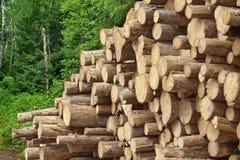 Woodpile del pino aserrado y registros Spruce para la industria de la silvicultura Imagen de archivo
