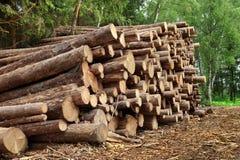 Woodpile del pino aserrado y registros Spruce para la industria de la silvicultura Fotografía de archivo libre de regalías