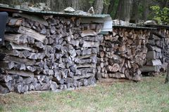 Woodpile on the edge of the forest. Forest. Woodpile on the edge of the forest stock images
