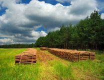 The wood pile on edge of the forest Royalty Free Stock Photography