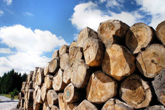 A woodpile at the edge of the way Royalty Free Stock Photography