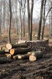 Woodpile in een Europees bos Stock Afbeelding