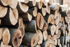 Woodpile in een Europees bos Royalty-vrije Stock Afbeeldingen