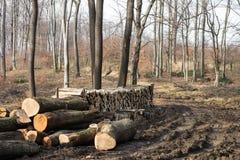Woodpile in een Europees bos Stock Afbeeldingen