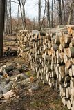 Woodpile in een Europees bos Royalty-vrije Stock Foto's