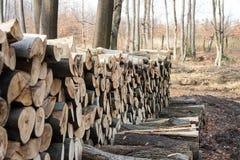 Woodpile in a europen bos Stock Afbeeldingen