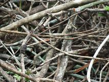Woodpile for fire. Zoom of dry woodpile for fire Royalty Free Stock Photo