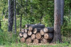 Woodpile. Firewood stacked in a  Stock of firewood in the forest stock image