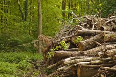 Woodpile in the forest. With green trees around stock photos