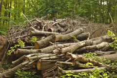 Woodpile in the forest. And green trees stock image