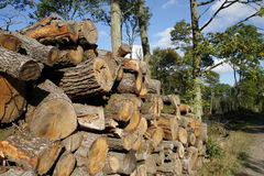 Woodpile in forest Royalty Free Stock Photography