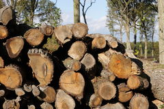Woodpile in France Royalty Free Stock Photos