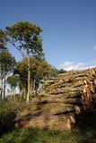 Woodpile in France Stock Photos