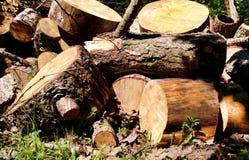 Woodpile grande para la industria de la silvicultura El pino grande y la madera Spruce apilaron la colocación de los registros fotografía de archivo libre de regalías