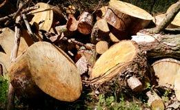 Woodpile grande para la industria de la silvicultura El pino grande y la madera Spruce apilaron la colocación de los registros imagenes de archivo