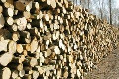 Woodpile in het bos Stock Afbeelding