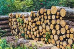 Woodpile im Wald Stockfoto