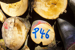 Woodpile with markings Royalty Free Stock Photos