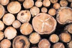 Woodpile na floresta fotos de stock