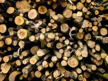 Woodpile newly fallen. Fresh Woodpile newly fallen and ready to burn Royalty Free Stock Images