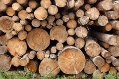 Free Woodpile Of Cut Trees In The Lumberyard Royalty Free Stock Image - 44046476