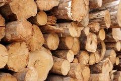 Free Woodpile Of Cut Trees In The Lumberyard Royalty Free Stock Photo - 44046635