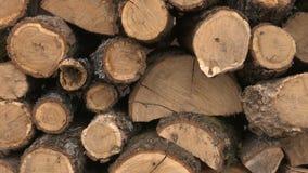 Woodpile stock footage