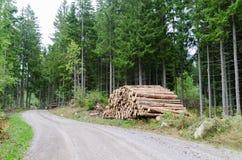 Woodpile poboczem w iglastym lesie fotografia royalty free