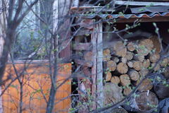 Woodpile. The woodpile prepared for the winter Stock Photo