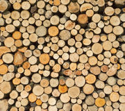 Woodpile with round firewood. From small tree trunks and thick branches in the sunlight Stock Photos