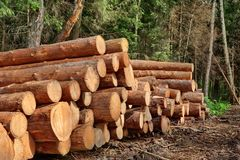 Woodpile From Sawn Pine And  Spruce Logs For Forestry Industry Royalty Free Stock Images