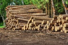 Woodpile From Sawn Pine And  Spruce Logs For Forestry Industry Royalty Free Stock Photography