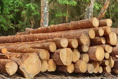 Woodpile From Sawn Pine And  Spruce Logs For Forestry Industry Stock Images