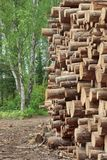 Woodpile From Sawn Pine And  Spruce Logs For Forestry Industry Royalty Free Stock Photos