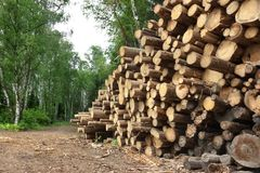Woodpile From Sawn Pine And  Spruce Logs For Forestry Industry Stock Image