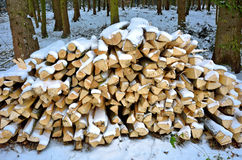 Woodpile in snowy forest Stock Image