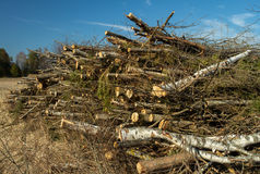 Woodpile. Some sticks and wood. Spring time Royalty Free Stock Images