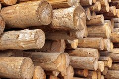 Woodpile of stacked wood logs Stock Photography