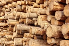Woodpile of stacked wood logs Stock Images