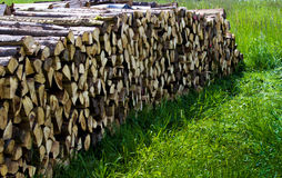 Woodpile stocked forest Royalty Free Stock Images