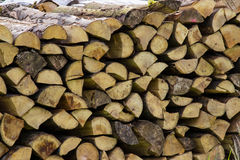Woodpile stocked forest Stock Images