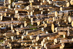 Woodpile in sunshine Stock Photos